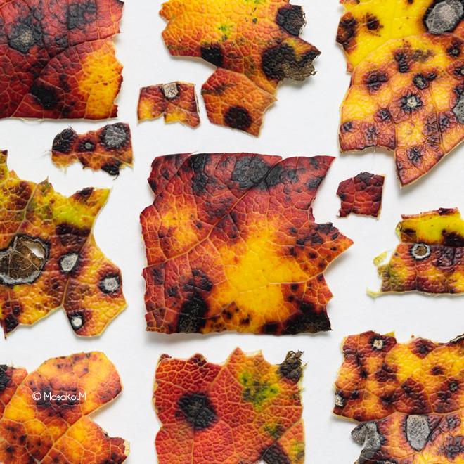 leaves2T.jpg